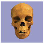 modern skull 1.png